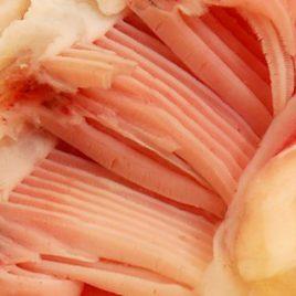 Fish gills wet specimen image print