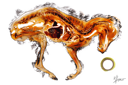 Canine anatomy art specimen print
