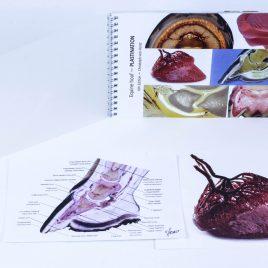Basic hoof booklet bundle