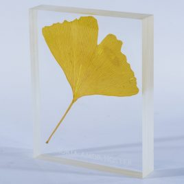 Ginkgo leaf plastinate embedding