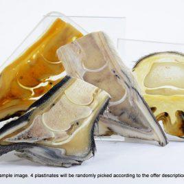 Paket Hufplastinate – Variationen