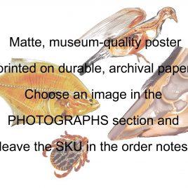 Matte 12 x 18 inch / 30 x 45 cm poster print