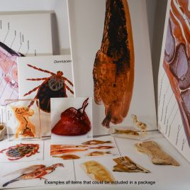 Individual plastination package deal – small