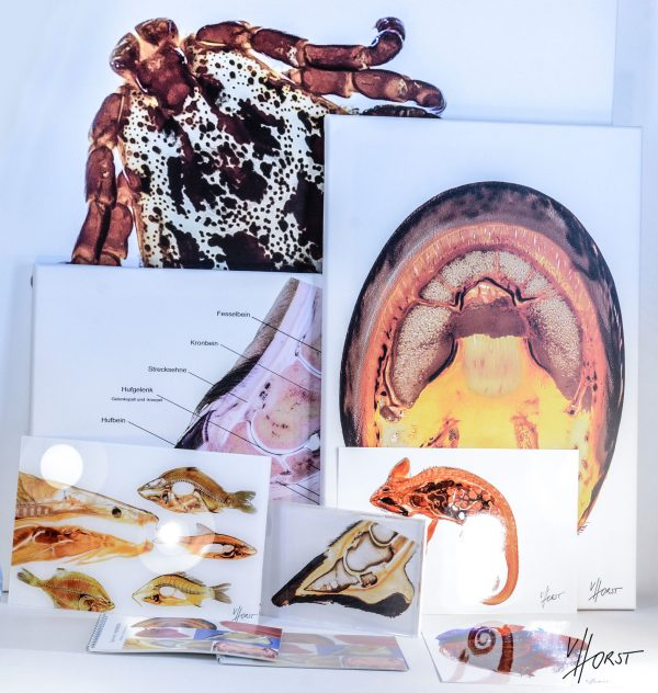 anatomy image prints