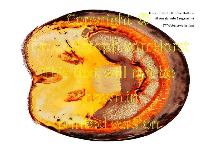 Ringbuch Hufanatomie