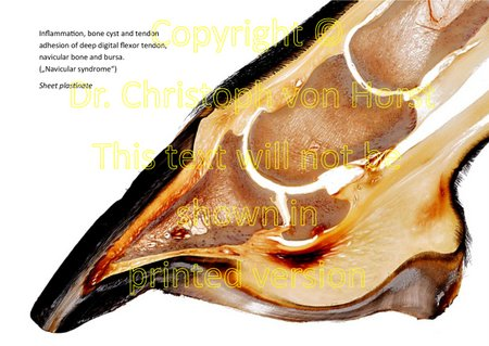 Scientific equine foot anatomy and pathology image handbook