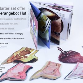 Hoof anatomy starter set