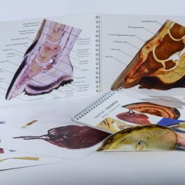 Horse hoof anatomy Christmas bundle