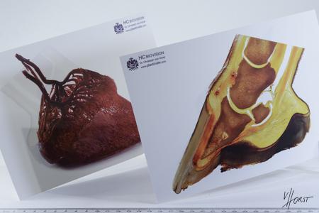 Scientific equine foot anatomy and pathology image handbook